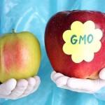 Что такое ГМО и как влияет ГМ продукция на человека?