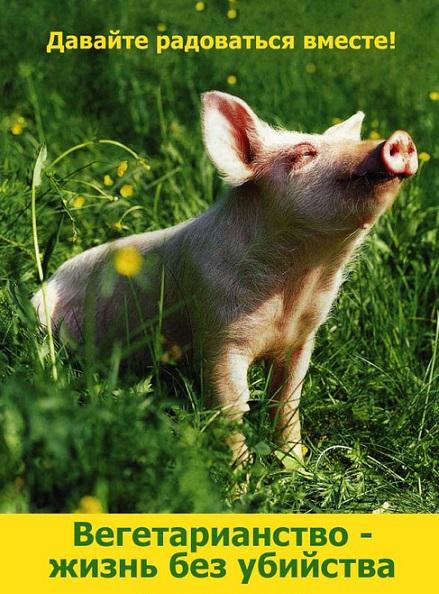 я вегетарианец