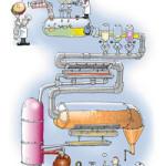Работа пищеварительной системы организма.
