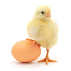 заменить куриное яйцо