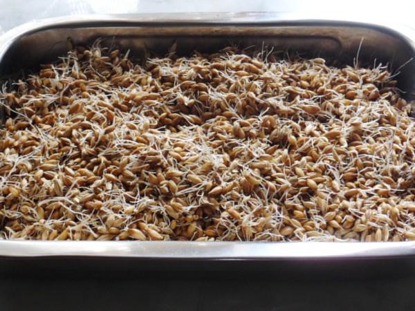 Домашний хлебный квас на 3 литра: как сделать в домашних условиях 99
