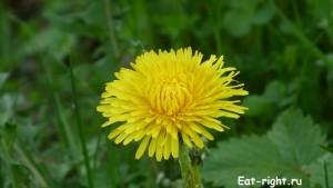 пчелиная цветочная пыльца