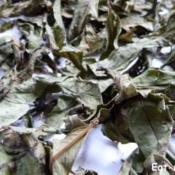 лучший способ ферментации иван-чая