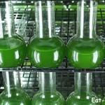 Спирулина или хлорелла. Сравниваем по 10 полезных свойств и выбираем победителя! Где купить хорошую хлореллу и спирулину?!