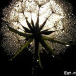 Растения и Луна  — невидимые нити тесной связи. Самый полный лунный календарь сбора лекарственных трав