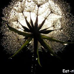растения и луна