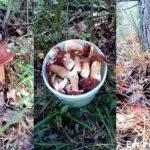 Правила сбора грибов — как легко и непринуждённо набрать целую корзину?!