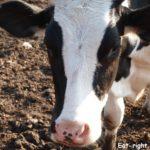 Веганство или вегетарианство — наш выбор и почему мы так решили?!