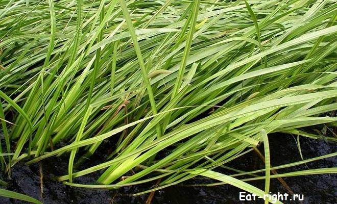 травы от паразитов