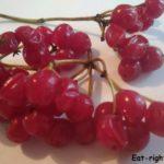 Полезные свойства ягод калины. Изучаем природных лекарей
